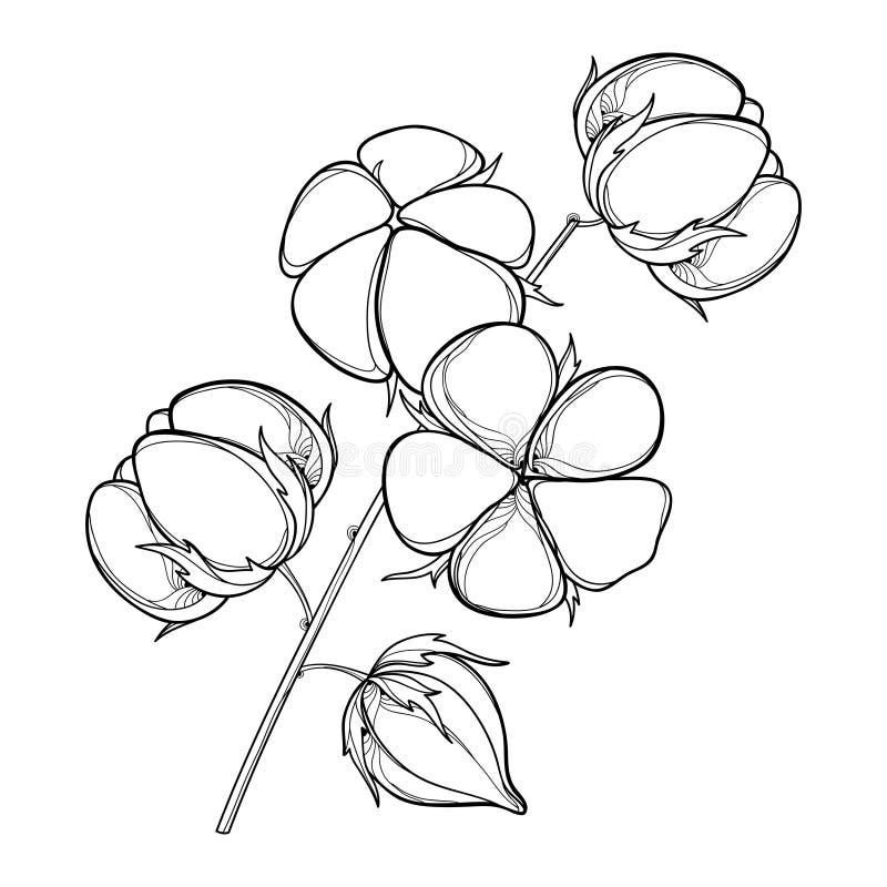 Vector il gambo con la capsula del cotone del profilo con la foglia e la capsula nel nero isolata su fondo bianco Cotone decorato illustrazione di stock