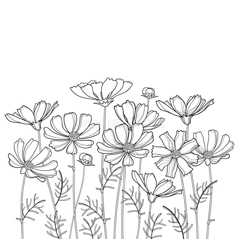 Vector il mazzo con il mazzo del fiore dell'universo o di Cosmea del profilo, la foglia decorata ed il germoglio nel nero isolati illustrazione di stock