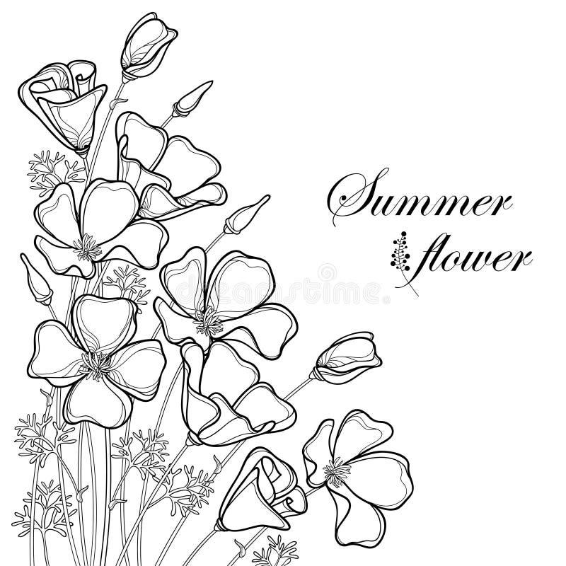 Vector il mazzo d'angolo del fiore del papavero di California del profilo o luce solare della California o Eschscholzia, foglia e royalty illustrazione gratis