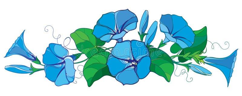Vector il mazzo orizzontale con la campana del fiore dell'ipomoea o di ipomea del profilo in foglia pastello e germoglio blu e ve illustrazione vettoriale