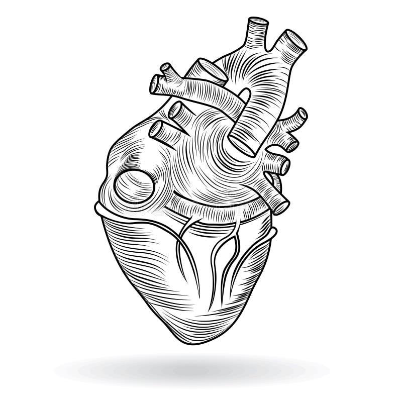 Vector il tasto o l'icona di un cuore umano illustrazione di stock