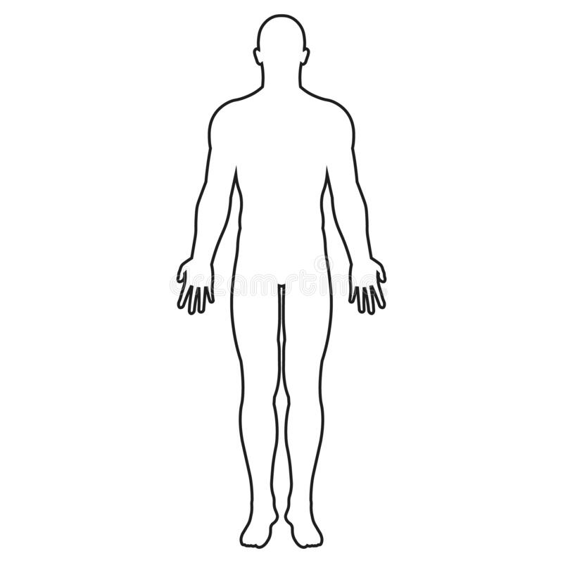 vector illstration of human body icon. outline design. isolated. stock  vector - illustration of male, human: 171680372  dreamstime.com