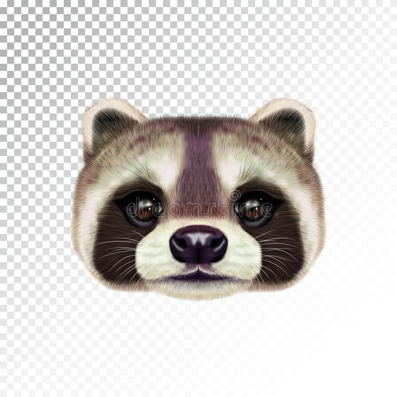 Vector Illustrated face of Raccoon. royalty free stock images