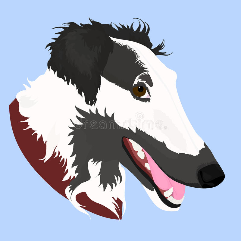 Vector Illustrated portrait of Borzoi dog. Cute face of Russian wolfhound domestic dog on blue background. vector illustration