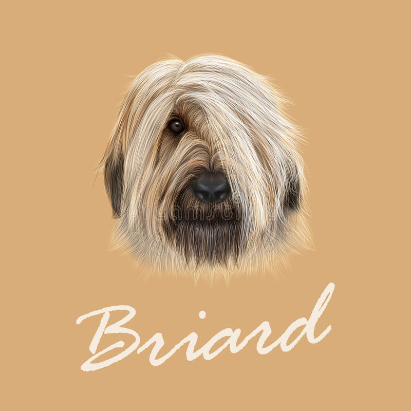 Vector Illustrated Portrait of Briard dog. vector illustration
