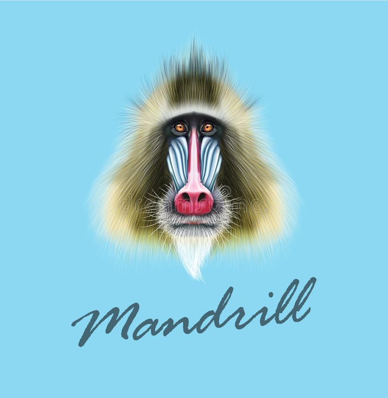 Vector Illustrated portrait of Mandrill monkey. Cute fluffy face of primate on blue background vector illustration