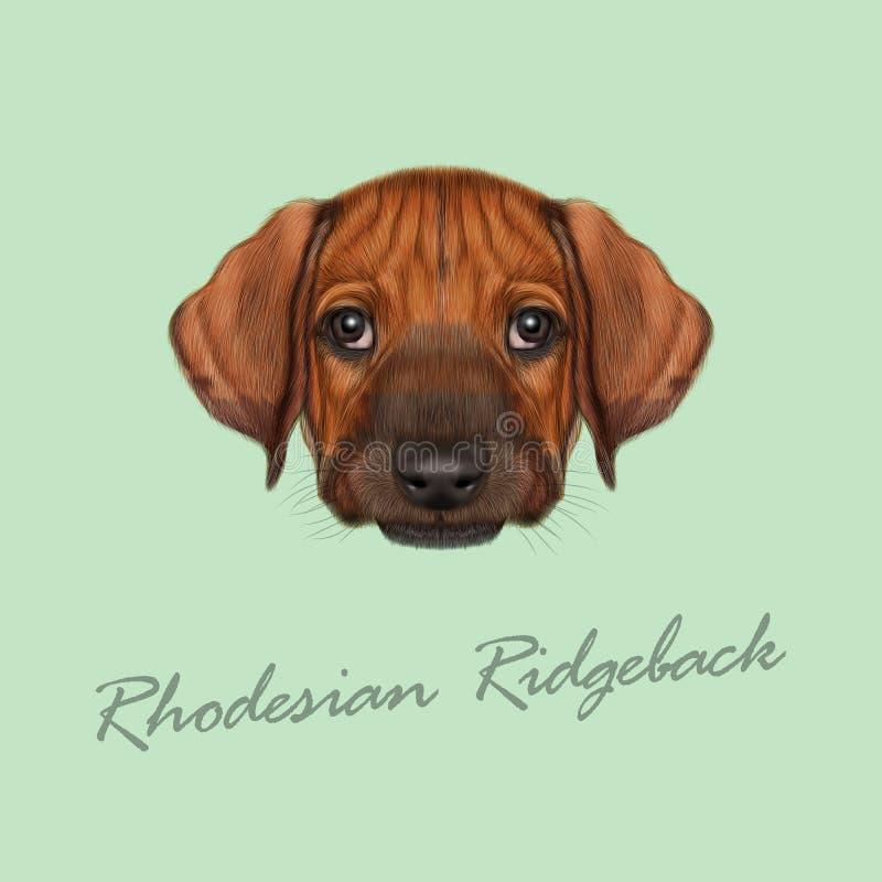Vector Illustrated Portrait of Rhodesian Ridgeback dog. royalty free stock image