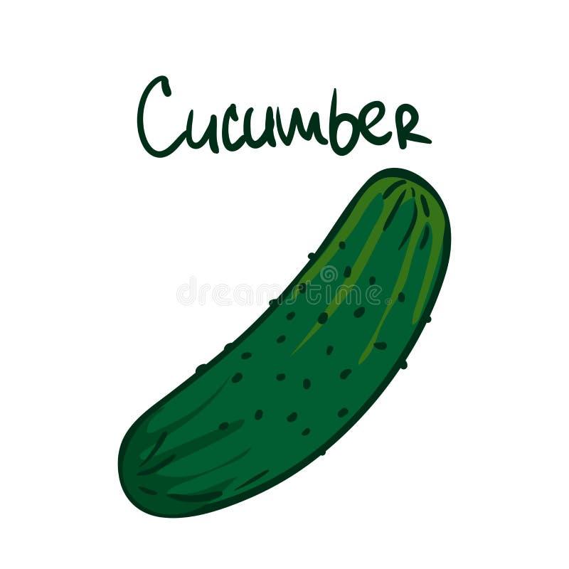 Vector illustratie Groene komkommer Gezond vegetarisch voedsel Ingrediënt voor salade Decoratie voor flarden, uithangborden, show stock illustratie