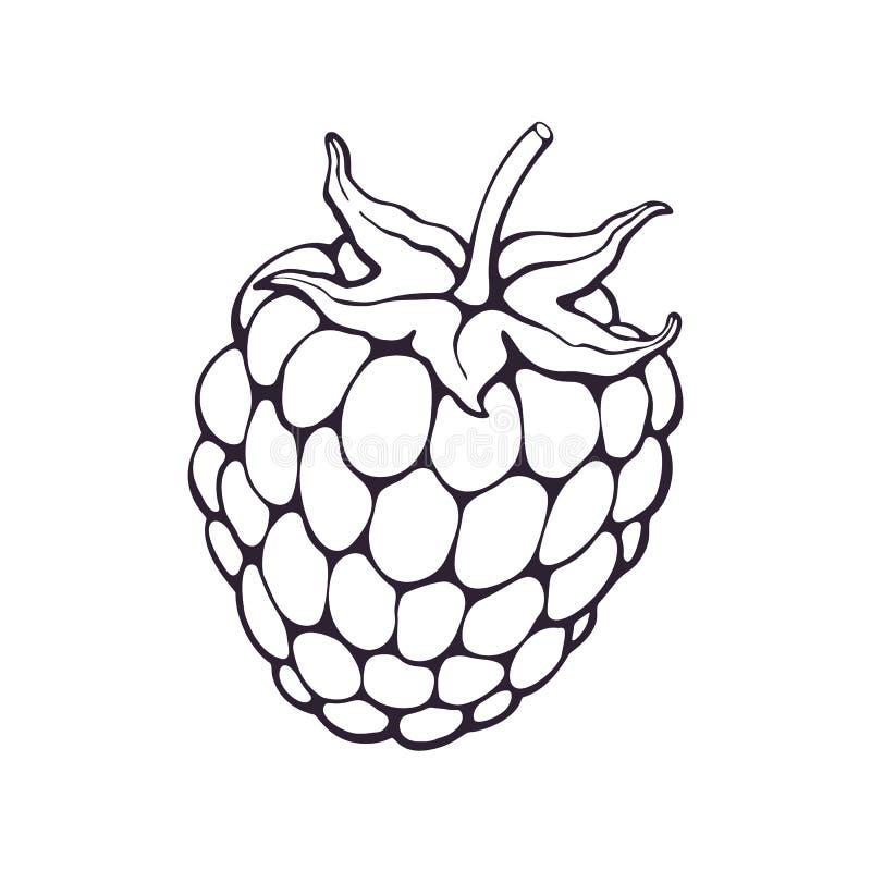 Vector illustratie Hand getrokken krabbel van braambes of frambozenfruit met stam Gezonde voeding en Vegetarisch voedsel beeldver royalty-vrije illustratie