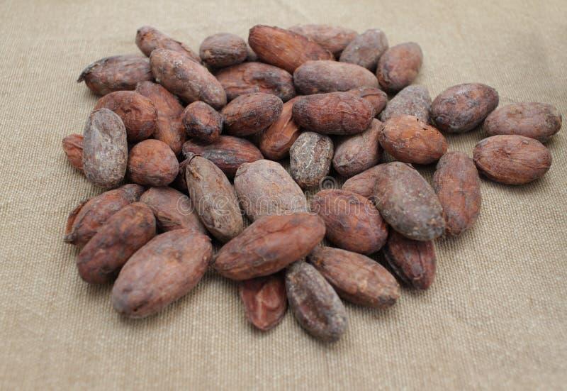 Vector illustratie op witte achtergrond Cacaobonen op een juteachtergrond royalty-vrije stock foto's