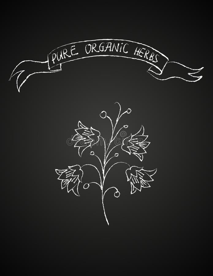 De bloem van het krijt op bord vector illustratie