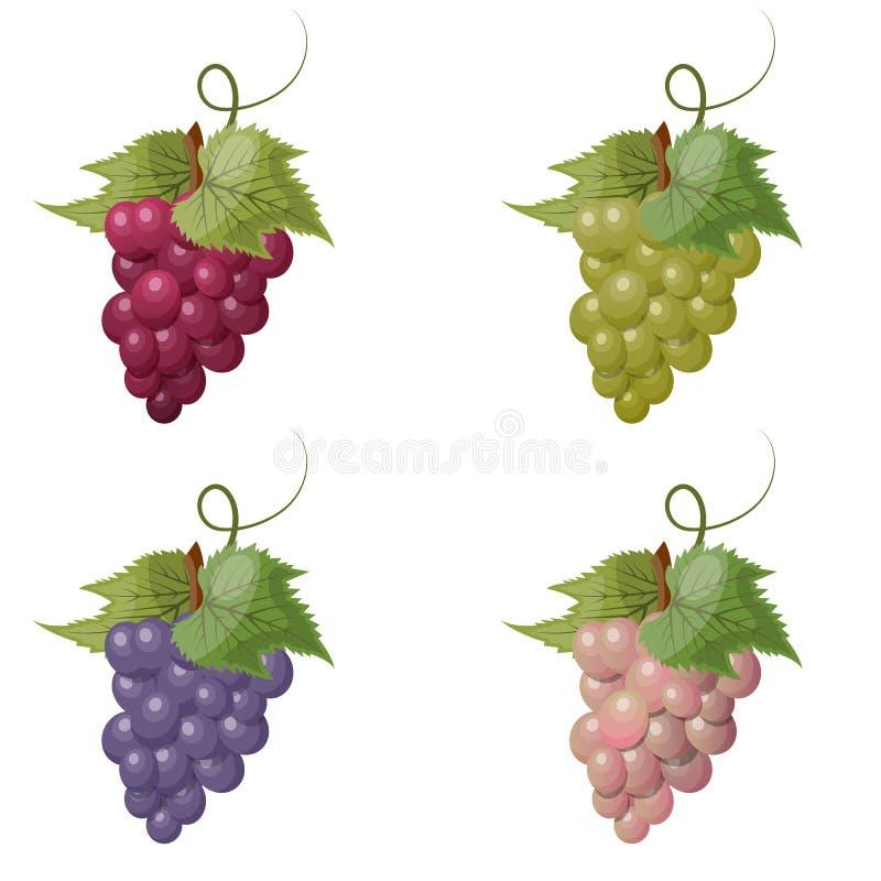 Vector illustratie van druiven royalty-vrije illustratie