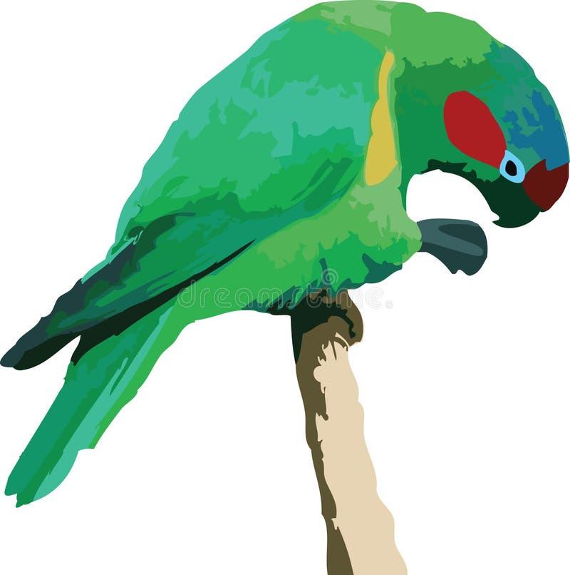Vector illustratie van een papegaai stock illustratie