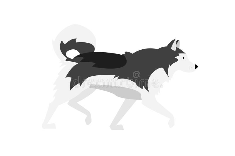 Vector Illustration: Alaskan Malamute. Black, Grey and White Dog - Nordic Breed. View from Profile royalty free illustration