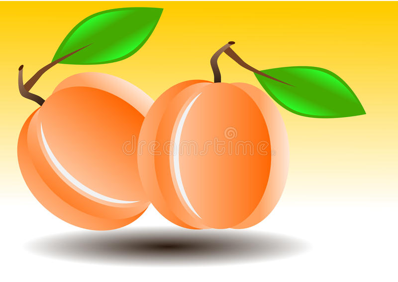 Vector illustration of apricot or peach stock image