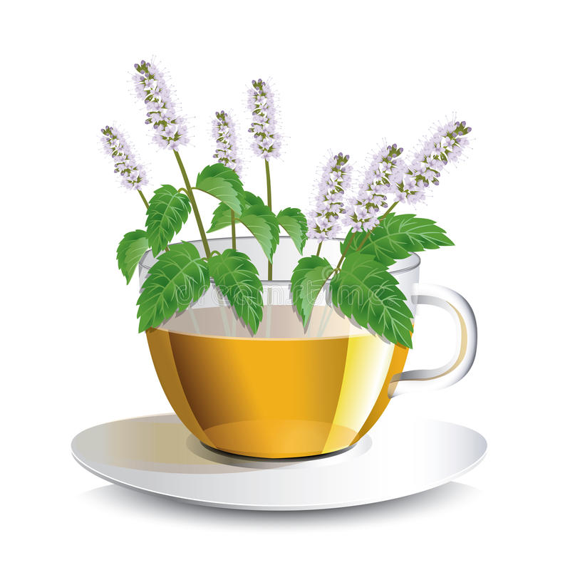 Vector illustration aromatic mint tea in a transparent cup. With flowers, a conceptual idea for the label stock illustration