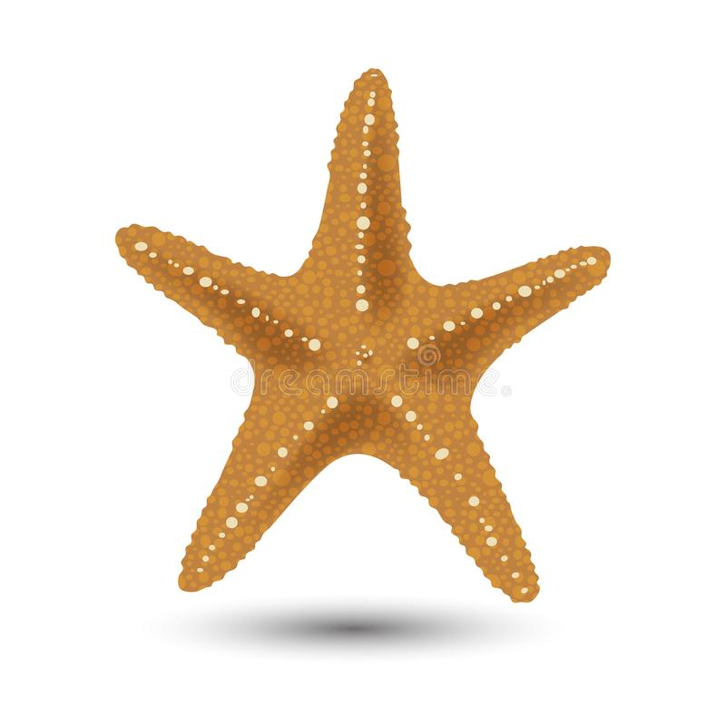 Download Vector Illustration, Badges, Stickers, Starfish In Realistic Style Isolated On White. Print, Template, Design Element Stock Vector - Illustration of design, calcareous: 107890394