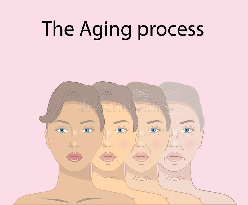 Illustration of beauty concept skin aging and anti-aging process royalty free illustration