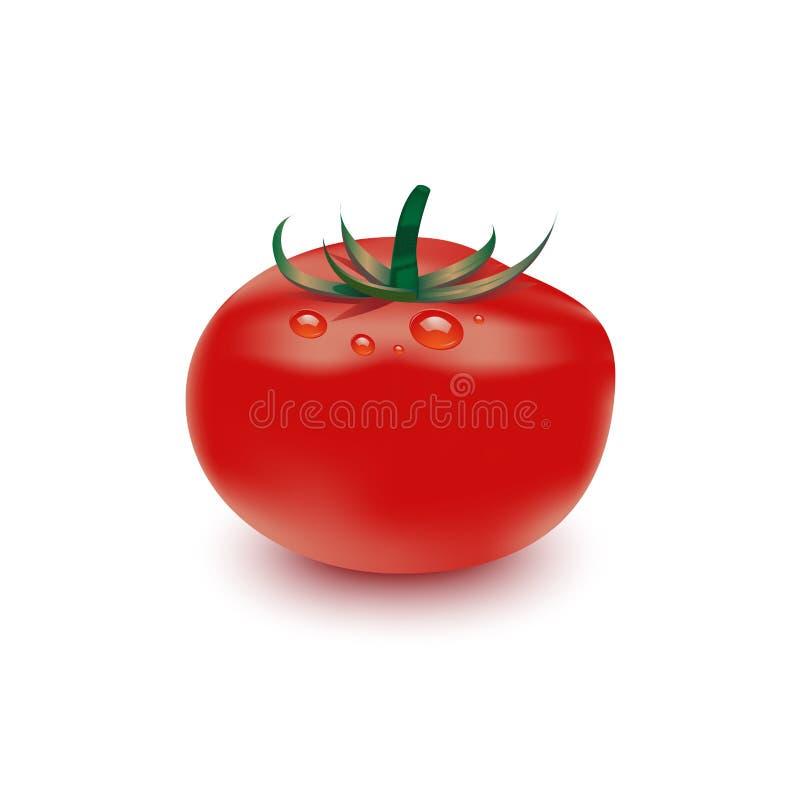 Vector illustration of big ripe red fresh tomato. On white background royalty free illustration