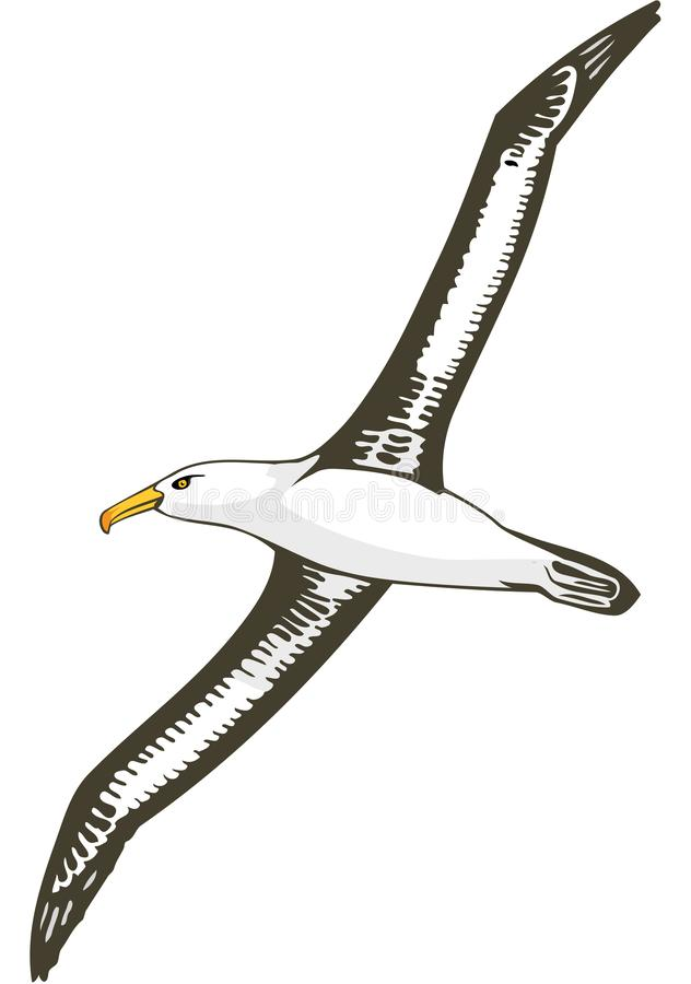 Black Browed Albatross Flying Illustration. A vector illustration of a black browed albatross flying vector illustration