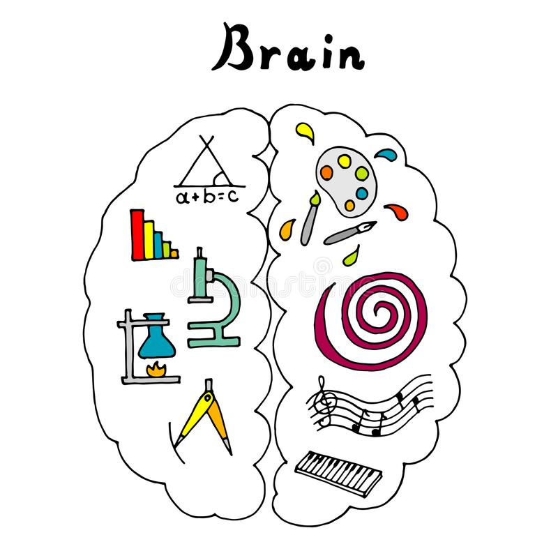 Vector illustration of the brain. Left and right hemispheres. Vector illustration of the brain. The left hemisphere is responsible for the logic and the right royalty free illustration