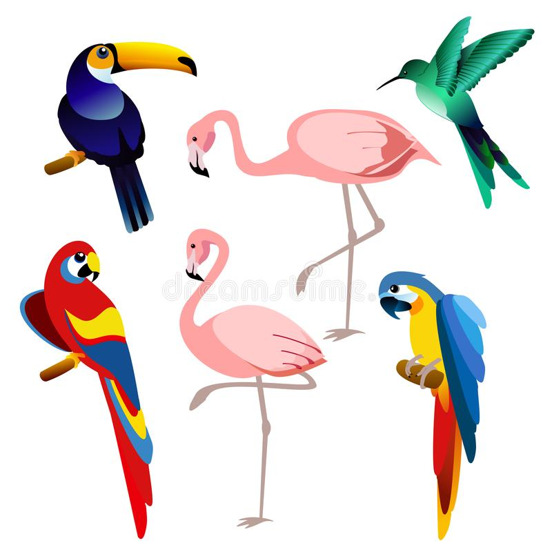 Vector illustration of bright color exotic tropical birds set isolated on white background in flat style. royalty free illustration