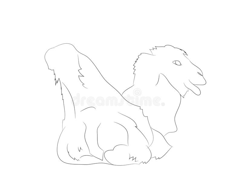 Camel Drawing Vector Illustration Stock Illustration - Illustration