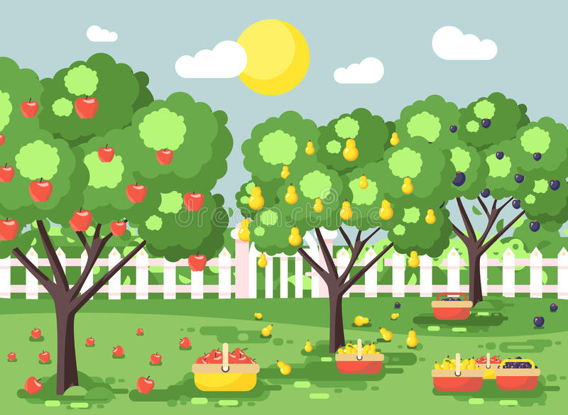Vector illustration cartoon harvesting ripe fruit autumn orchard garden with plums, pears, apples trees, put crop in stock illustration