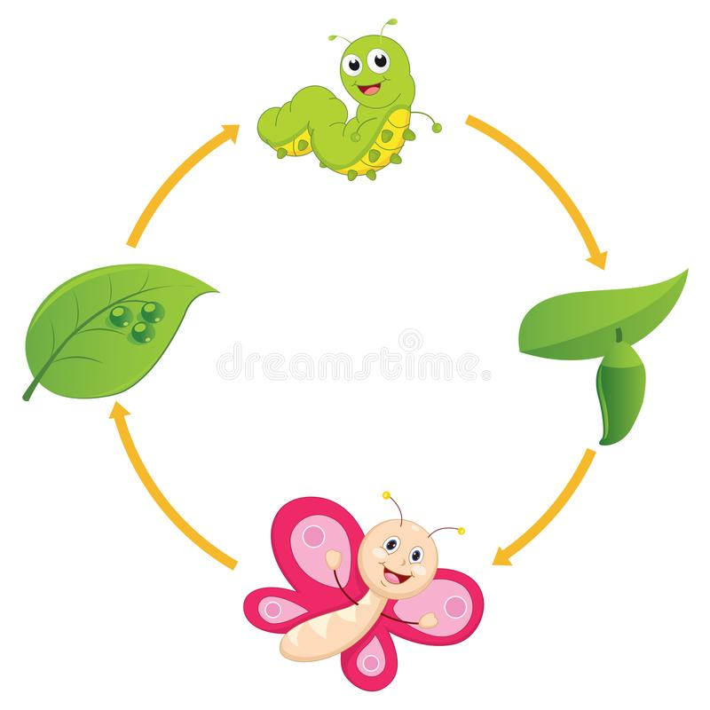 Vector Illustration of Cartoon Life Cycle of Butterfly. Eps 10 vector illustration