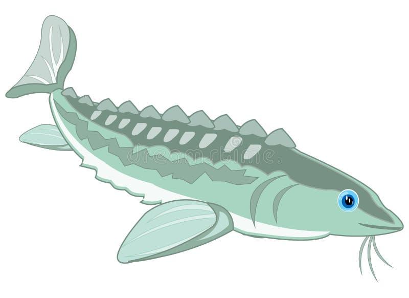 Vector illustration of the cartoon of valuable fish sturgeon vector illustration