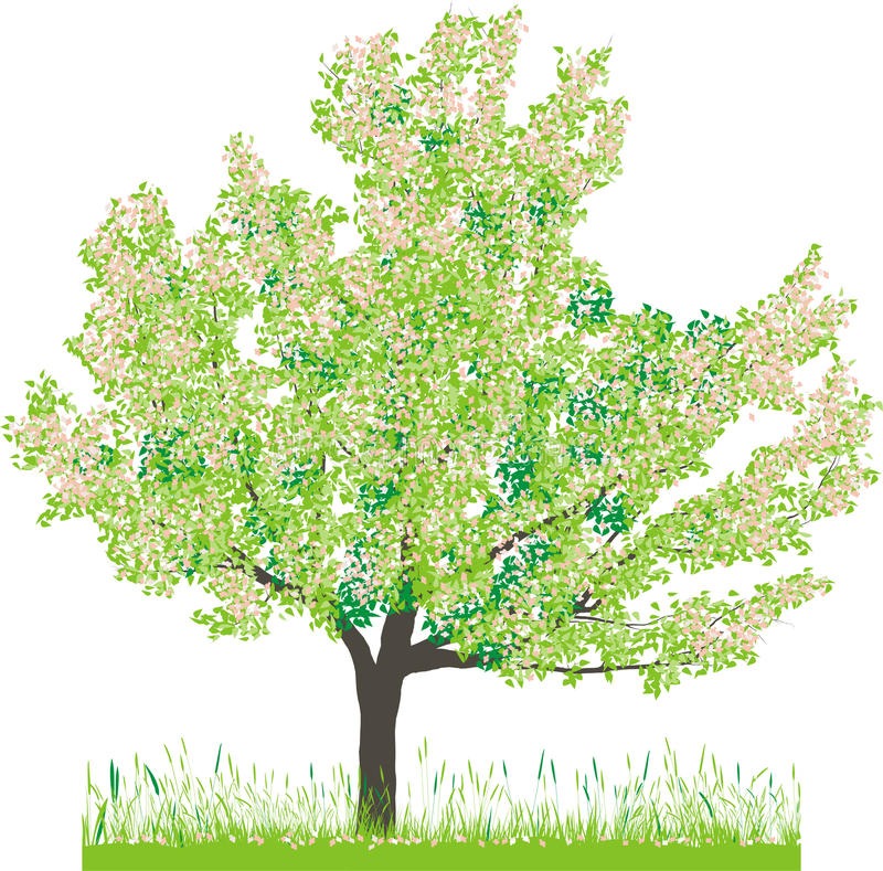 Download Vector Illustration Of Cherry Tree In Spring Stock Vector - Image: 13167972