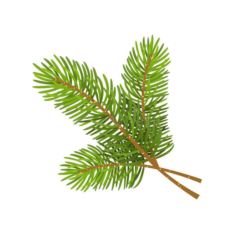 Vector illustration of christmas tree branch on white background. Vector illustration of christmas tree branch isolated on white background stock illustration