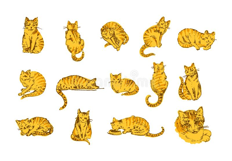 Vector illustration concept of Cat hand drown illustration on white background vector illustration