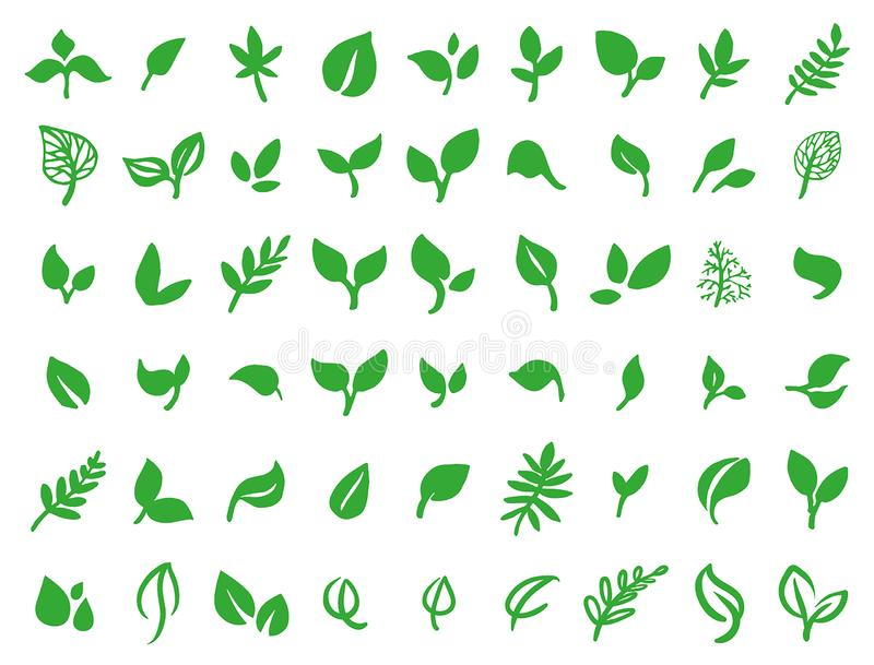 Vector illustration concept of green leaves. Colorful on white background. Vector illustration concept of green leaves vector illustration