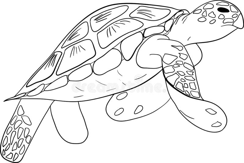 Vector illustration. Contour sea turtle isolated background stock image
