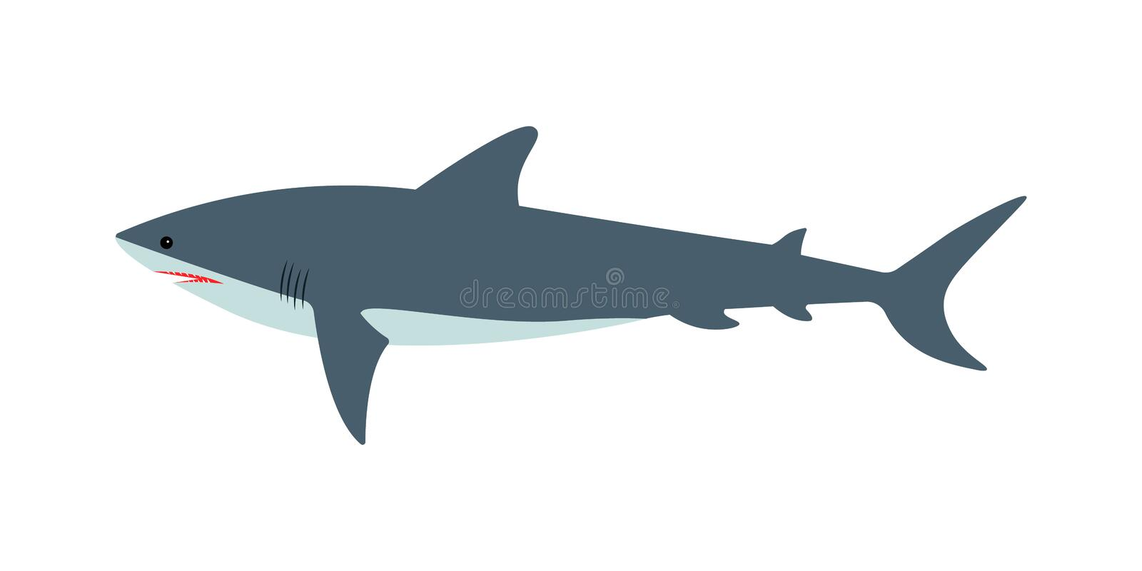 Vector illustration of a dangerous great white shark on an isolated white background. Side view, flat style royalty free illustration