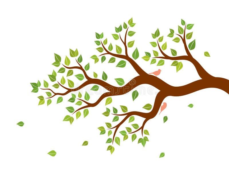 Vector Illustration des Baumasts mit grünen Blättern und zwei Vögeln auf weißem Hintergrund stock abbildung