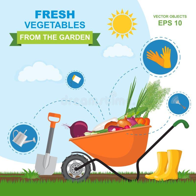 Vector Illustration des unterschiedlichen frischen, reifen, köstlichen Gemüses vom Garten in der orange Schubkarre Ikonensatz unt stock abbildung