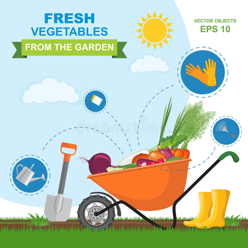 Vector illustration of different fresh, ripe, delicious vegetables from the garden in orange wheelbarrow. Icon set of different ki. A colorful vector stock illustration