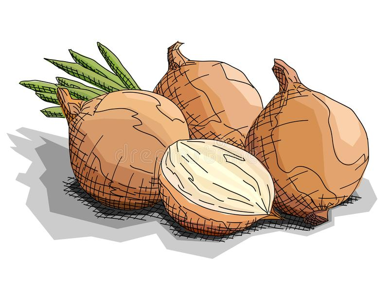 Vector illustration of drawing vegetable onions. royalty free illustration