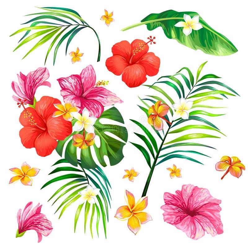 Vector Illustration einer realistischen Artniederlassung einer tropischen Palme mit Hibiscusblumen lizenzfreie abbildung