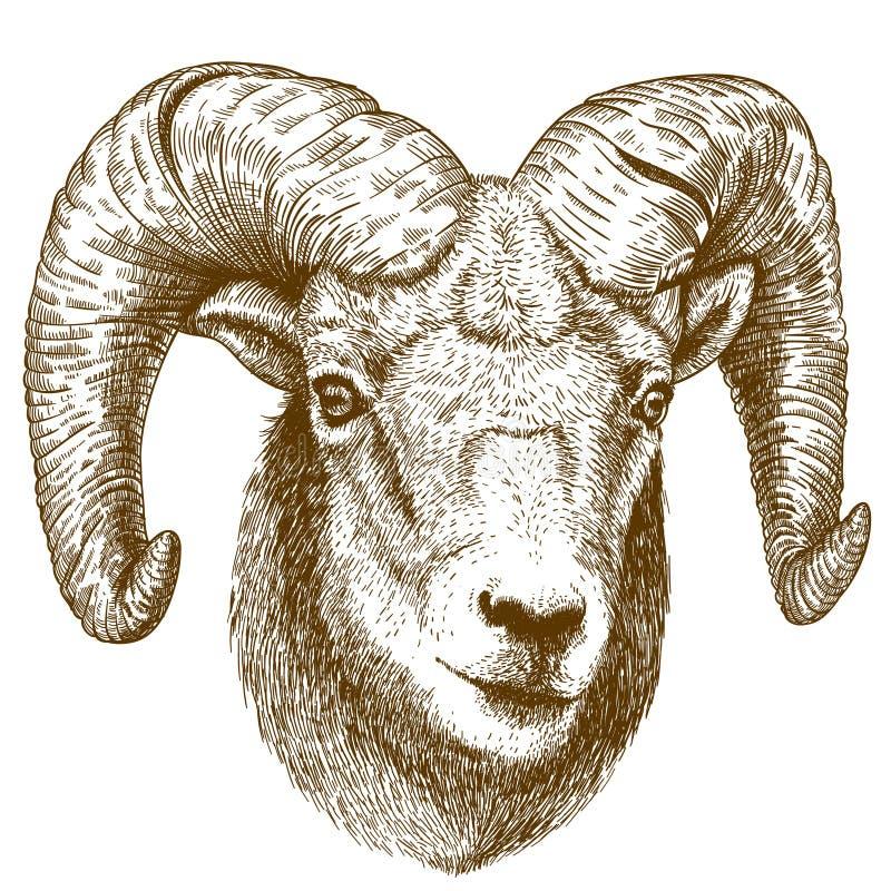 Vector illustration of engraving ram head. On white background royalty free illustration