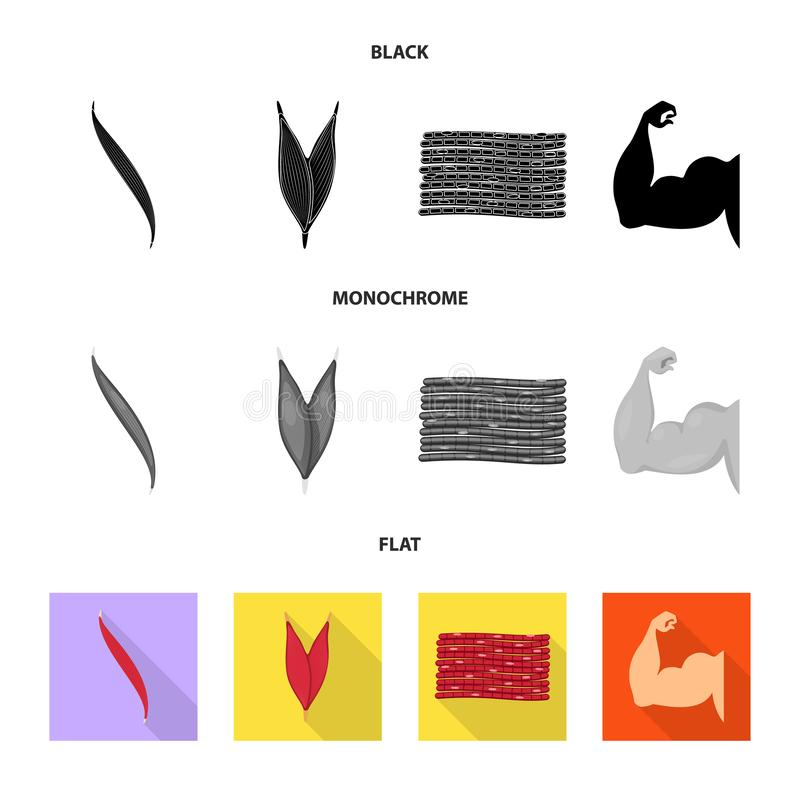 Vector design of fiber and muscular logo. Set of fiber and body  stock symbol for web. Vector illustration of fiber and muscular icon. Collection of fiber and vector illustration