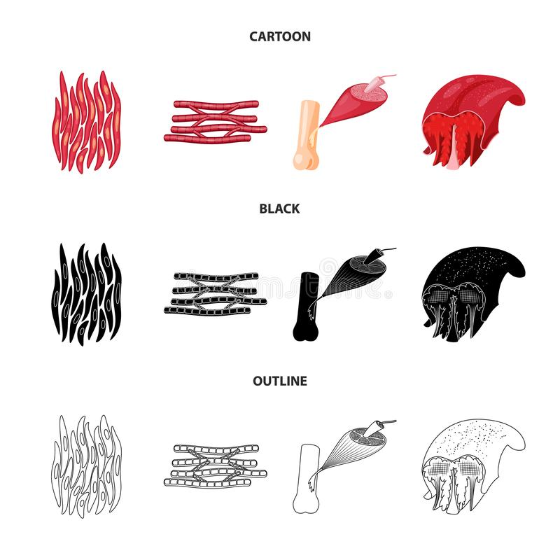 Vector illustration of fiber and muscular icon. Collection of fiber and body  vector icon for stock. Isolated object of fiber and muscular symbol. Set of fiber vector illustration