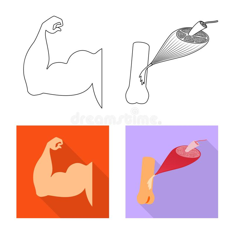 Vector design of fiber and muscular logo. Set of fiber and body  vector icon for stock. Vector illustration of fiber and muscular icon. Collection of fiber and royalty free illustration