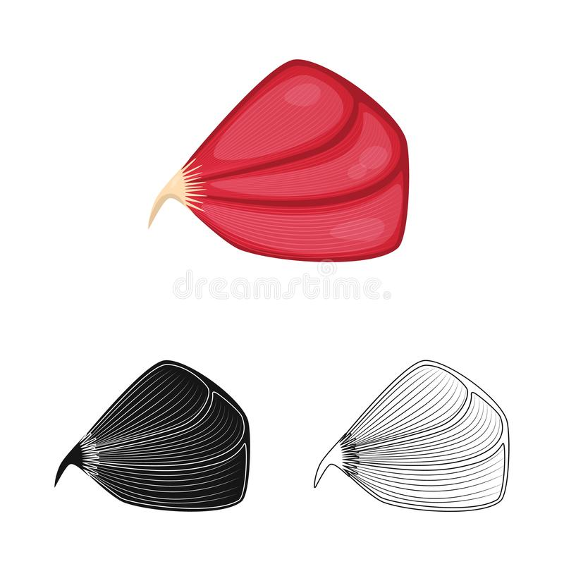 Vector illustration of fiber and muscular icon. Collection of fiber and body  stock symbol for web. Isolated object of fiber and muscular symbol. Set of fiber royalty free illustration