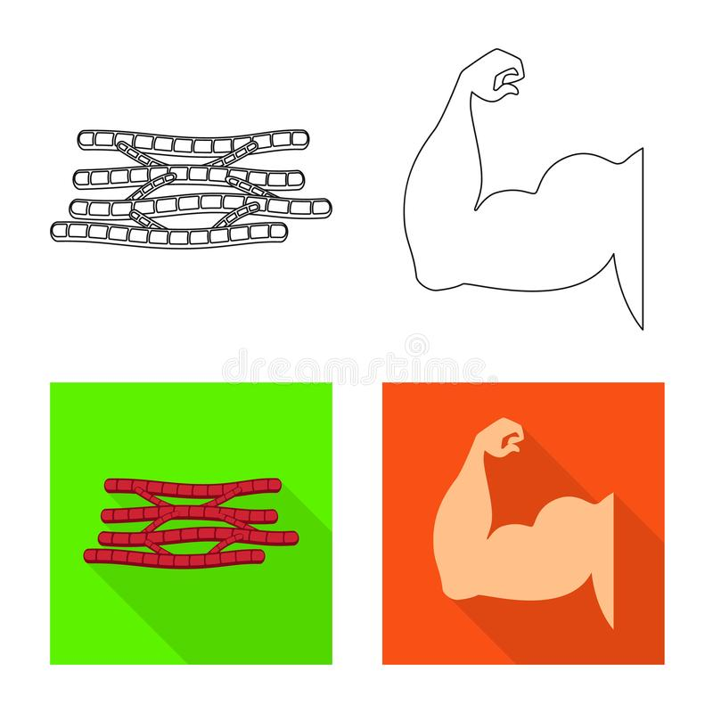 Vector design of fiber and muscular logo. Collection of fiber and body stock symbol for web. Vector illustration of fiber and muscular icon. Set of fiber and royalty free illustration