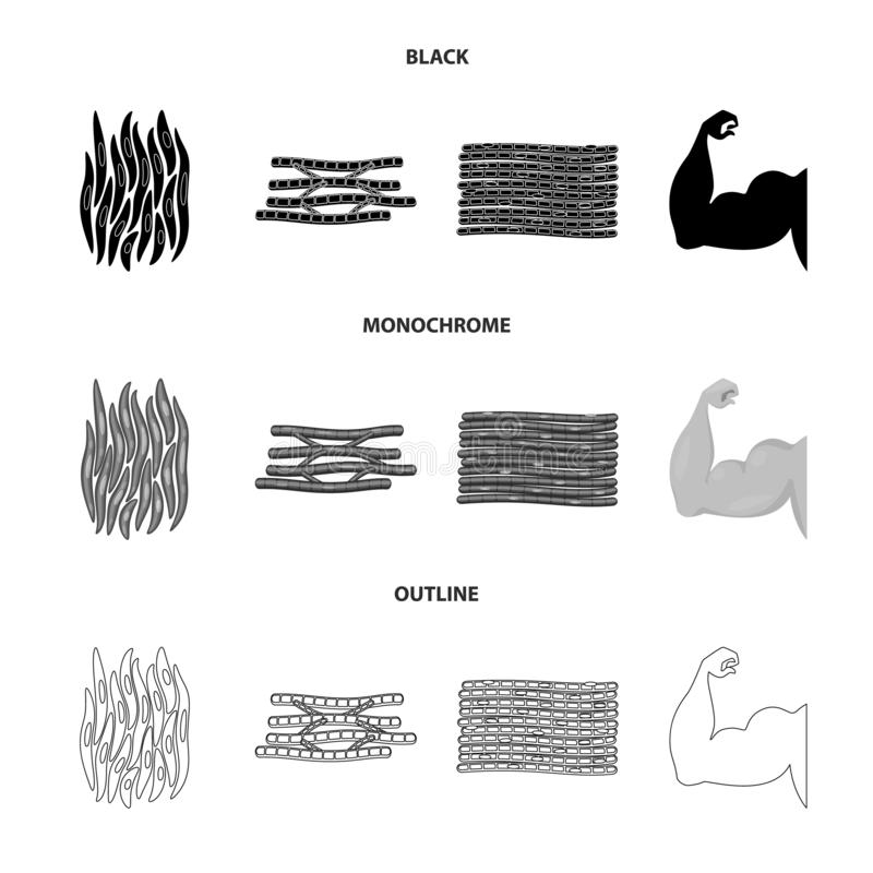Vector illustration of fiber and muscular icon. Set of fiber and body stock symbol for web. Isolated object of fiber and muscular symbol. Collection of fiber vector illustration