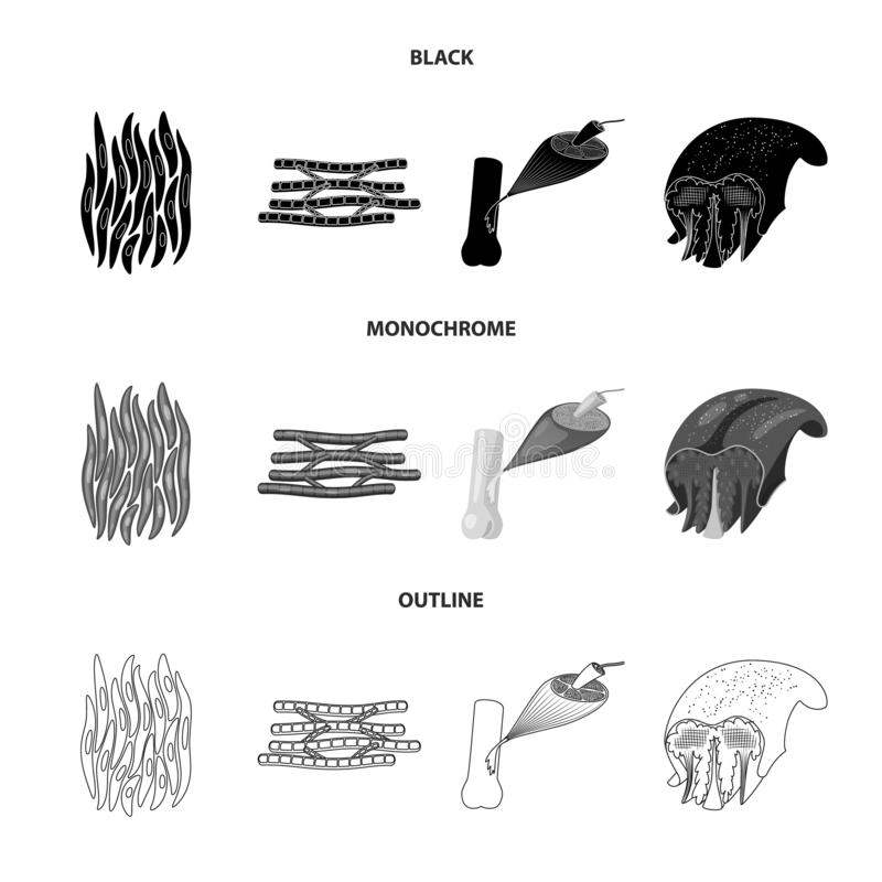Vector illustration of fiber and muscular icon. Set of fiber and body  stock symbol for web. Isolated object of fiber and muscular symbol. Collection of fiber stock illustration