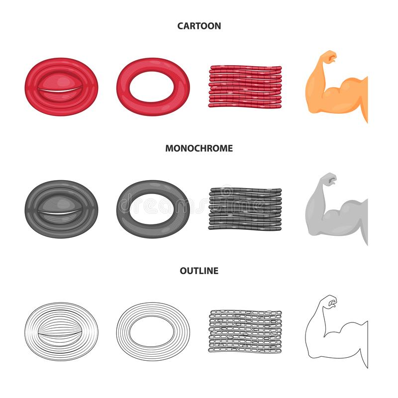 Vector design of fiber and muscular logo. Collection of fiber and body vector icon for stock. Vector illustration of fiber and muscular icon. Set of fiber and stock illustration